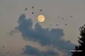 بالصور والفيديو... قمر الحصادين في سماء رام الله وجنين