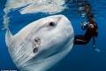 مصور يستطيع ان ياخذ صورة لسمكة غريبة في المحيط