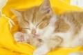 لماذا القطط تنام ضعف ما ينام الإنسان؟