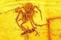 لحظة هجوم عنكبوت على فريسته تتجمد في الزمان لأكثر من 100 مليون عام!