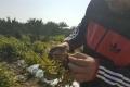 تحقيق صحفي خطير وبالأدلة ..حين يأكل الفلسطينيّون خضاراً تتغذّى على نفايات إسرائيليّة مطحونة