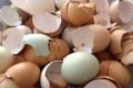 لا ترمِ قشر البيض بعد الآن .. والسبب هو!