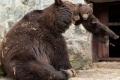 صور في غاية الروعة لأم الدب وهي تضرب إبنها لإسائته الأدب