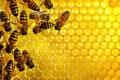 ما الذي سيحدث في حال اختفاء النحل من الكرة الأرضية؟