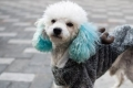 في الصين ليس ممنوعاً فقط إنجاب أكثر من طفلٍ واحد.. القوانين القاسية تطال حتى الكلاب