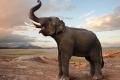 هل يمكن يمكن لـ الفيلة أن تسمع من أقدامها؟