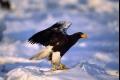 بسبب دخان الحرائق.. نفوق 80% من الطيور الجارحة في سيبيريا