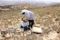قطاع تربية النحل.. ثروة تحتاج إلى استثمار جيد