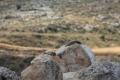 وادي الفارعة: الوبر الصخري... بين مصلحة المزارع وتوازن الطبيعة