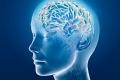 ما هي القدرة التخزينية للدماغ البشري بالغيغابايت ؟