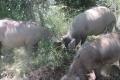 الخنزيرُ البري...سلاح إسرائيل الموجه نحو المزارعين
