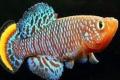 ما أهمية عثور العلماء على مضادات اكتئاب متراكمة في أدمغة الأسماك