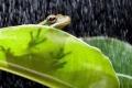 كيف تتنبأ الحيوانات بالطقس والكوارث الطبيعية؟