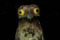 هل سبق وشاهدتم طيور البوتو من قبل ؟!