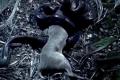 فيديو  أطول ثعبان في العالم يبتلع غزالاً بالكامل