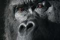 إبداع الخالق : صور مبهرة لحيوانات تظهر ايماءات مماثلة لنا