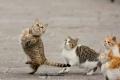 ماذا يحصل إذا قصصنا شوارب القطة؟