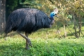 أخطر 6 طيور في العالم