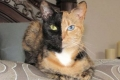 """القطة """"فينوس"""" ذات الوجهين أكثر مشاهير اليوتيوب... شاهد الصور"""