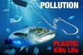 لا التحذيرات نفعت ولا التشريعات ردعت...بلاستيك في أحشاء 95% من حيوانات بحر الشمال