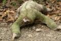 تعرف الى اكثر حيوانات العالم بلادةً... الكسلان إسم على مسمى