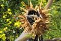 أخطر 9 نباتات في العالم
