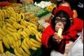 هل تعرف لماذا يتناول القرد الموز بكثرة؟ العجب العجاب!!