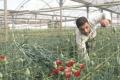 التطبيع الزراعي سياسة يجب إيقافها!!