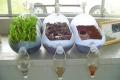 مدهش: شاهد كيف تنظف النباتات التربة!