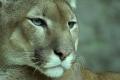 شاهد | إعلان انقراض هذا الحيوان بشكل نهائي: تقرر رفعه من قائمة السلالات المهددة