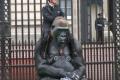 أكبر غوريلا في العالم تحتفل بعيد ميلادها الـ 53