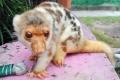 الكشف عن حيوان غريب مجهول الهوية والفصيلة