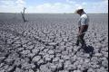 بعد الأجواء الحارة والمزمنة...نصف مليار شجرة خسائر الجفاف غير المسبوق الذي يضرب ولاية تكساس