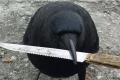 الغربان تهاجم البشر في أستراليا