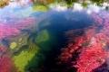 نهر الالوان الخمسة من اجمل انهار العالم :