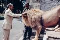 إمبراطور إثيوبي أزيح بانقلاب وعثر على جثته تحت مرحاض