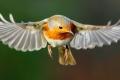 كيف يمكن للطيور أن ترى المجال المغناطيسي للأرض؟