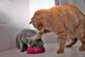 صور مضحكة لقطط تم التقاطها في اللحظة المناسبة ...