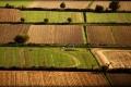 الجفاف يضرب إيطاليا بقوة ... والبندورة والبنجر وعباد الشمس على رأس المتضررين