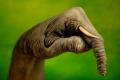 إبداع بلا حدود: أكثر من 30 صورة لفن الرسم على الأيادي للفنان جويدو دانيلي
