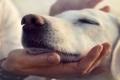 هل هو صحيح أن سنة من عمر الإنسان تعادل 7 سنوات من عمر الكلاب؟