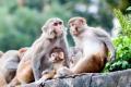 الحيوانات التي يعبدها البشر حول العالم!