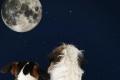 لماذا تطلق الكلاب ترنيمات العواء الحزينة نحو القمر؟