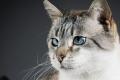 السجن 16 عاماً لقاتلٍ متسلسل تخصَّص في إزهاق أرواح القطط