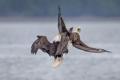 صور: معركة دامية بين نسرين بسبب حقوق الصيد