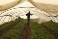 لماذا يتفاقم تآكل وتدهور الأراضي الزراعية الفلسطينية؟ هل من حلول فعالة؟