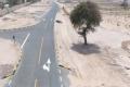 يتجاوز عمرها 200 عام.. الشارقة تغير مسار طريق للحفاظ على شجرة معمرة في الإمارات