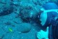 عنكبوت البحر.. أحدث موضة لتنظيف الأسنان