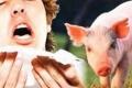 12 حالة وفاة في غزة بسبب انفلونزا الخنازير