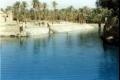 عين التمر في العراق.. واحة عيون يهددها الجفاف